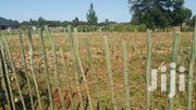 1/4 Plot Kimumu With Title | Land & Plots For Sale for sale in Uasin Gishu, Moiben