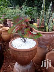 Plants' Pots And Potted Plants | Garden for sale in Nairobi, Karen