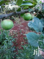 Ann Apple Fruit Seedlings | Feeds, Supplements & Seeds for sale in Nyeri, Karatina Town