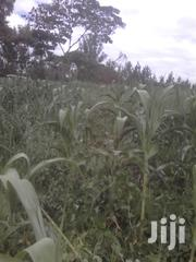 3.8 Acres in Kenal 500metres Off Thika Rd and Touches the River | Land & Plots For Sale for sale in Kajiado, Ongata Rongai