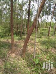 Land For Sale | Land & Plots For Sale for sale in Siaya, Siaya Township