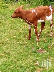 4 Acres Land That Is in 20 Acre Plot | Land & Plots For Sale for sale in Uasin Gishu, Ngeria