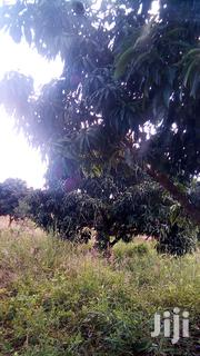 Land for Sale With Piped Water and Ready Title Deed Half an Acre. | Land & Plots For Sale for sale in Embu, Kagaari North