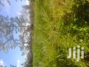 Prime 4 Acres of Agricultural Land at Makuyu Gathaiti | Land & Plots For Sale for sale in Murang'a, Makuyu