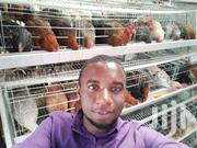 Semi Automatic Poultry Battery Cage For 128 Birds Capacity | Farm Machinery & Equipment for sale in Nairobi, Kangemi