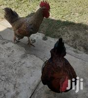 Kienyeji Roosters | Livestock & Poultry for sale in Mombasa, Bamburi