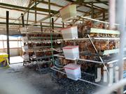 Kenchik Layers | Birds for sale in Nakuru, Menengai West