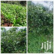 1acre for Sale | Land & Plots For Sale for sale in Nyeri, Karatina Town