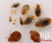 Guaranteed Fumigation Services & Pest Control Services In Kenya Bedbug | Cleaning Services for sale in Nairobi, Nairobi Central