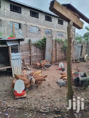 Sasso Chickens | Livestock & Poultry for sale in Marsabit, Marsabit Central