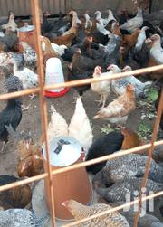3months Healthy Improved Kienyeji Chicks. | Livestock & Poultry for sale in Nairobi, Komarock
