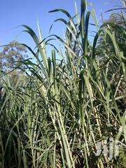 Nappier Grass For Sale | Feeds, Supplements & Seeds for sale in Murang'a, Kigumo