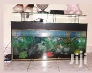 Aquarium For Sale | Fish for sale in Mombasa, Bamburi