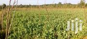 French Beans | Meals & Drinks for sale in Meru, Timau