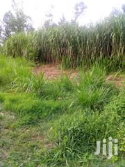 Githunguri Kanjai ,Quarter Acre Plot at 2m Only. | Land & Plots For Sale for sale in Kiambu, Ngewa