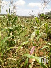 Nyeri Chaka 20 Acres at 2.5m | Land & Plots For Sale for sale in Nyeri, Kamakwa/Mukaro