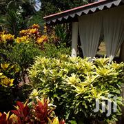 Guest Rooms | Houses & Apartments For Rent for sale in Kilifi, Malindi Town