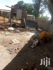 Selling A Guard Dog | Dogs & Puppies for sale in Kilifi, Malindi Town