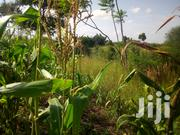 One and a Quarter Acre Parcel of Land in Juja Farm | Land & Plots For Sale for sale in Kiambu, Juja