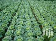 Millions In Farming Using Our Crop And Livestock Guide | Feeds, Supplements & Seeds for sale in Nairobi, Nairobi Central