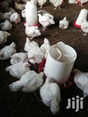 Broiler Chicken | Livestock & Poultry for sale in Kilifi, Tezo