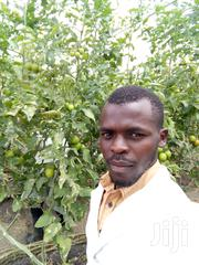 Farm Manager | Farming & Veterinary CVs for sale in Homa Bay, Kaksingri West