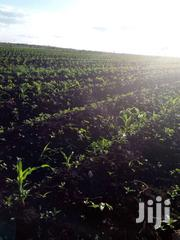 2 Acres of Fertile Land in Kakawa-Mbeere | Land & Plots For Sale for sale in Embu, Mwea