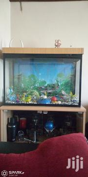 Aquarium For Sale | Fish for sale in Nairobi, Harambee