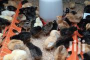 5 Days Improved Kienyeji Chicks. | Livestock & Poultry for sale in Nairobi, Komarock