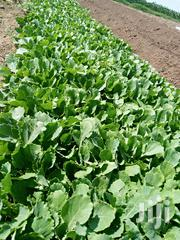 Cabbages Available | Feeds, Supplements & Seeds for sale in Nairobi, Westlands