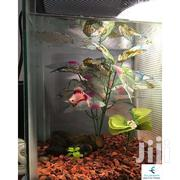 Custom Made Aquarium/Fish Tank | Pet's Accessories for sale in Nairobi, Kangemi
