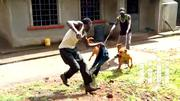 Dog Trainer,Security Consultant | Pet Services for sale in Nairobi, Karura