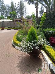 Pot And A Mixure Of Colours To Bring The Garden Beautiful | Garden for sale in Nairobi, Karen