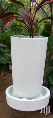 Flower Planters Trees And Flowers. | Garden for sale in Kwale, Ukunda