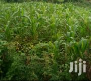 1/4 Plot at Muguga Kerwa Kikuyu | Land & Plots For Sale for sale in Kiambu, Kikuyu