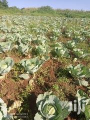 Cabbages On Sale   Meals & Drinks for sale in Narok, Ololulung'A