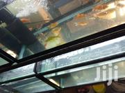 Ornamental Fish | Fish for sale in Nairobi, Nairobi Central