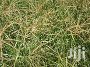 Boma Rhodes Seed Grass | Feeds, Supplements & Seeds for sale in Uasin Gishu, Kapsoya