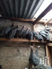 Guinea Fowl Chicks | Livestock & Poultry for sale in Nairobi, Embakasi