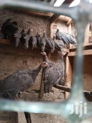 Guinea Fowls | Livestock & Poultry for sale in Nairobi, Embakasi