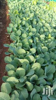 Vegetable Seedlings | Feeds, Supplements & Seeds for sale in Kiambu, Githiga (Githunguri)