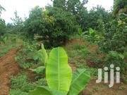 One Acre for Sale at Maragua Ridge | Land & Plots For Sale for sale in Murang'a, Kambiti