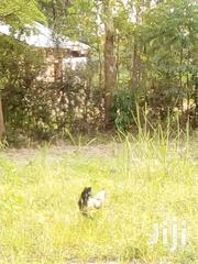 Transferring | Commercial Property For Sale for sale in Bungoma, South Bukusu
