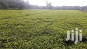 6 Acres On Sale In Kapsuser, Kericho County | Land & Plots For Sale for sale in Kericho, Kapsuser