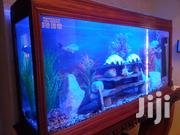 Fish Aquarium | Fish for sale in Nairobi, Lavington