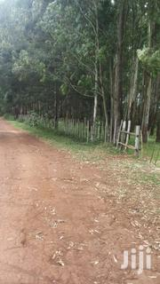 Land 30 Acres In Kaprobu With Planted Trees | Land & Plots For Sale for sale in Uasin Gishu, Moiben