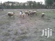50*100 Plots For Sale | Land & Plots For Sale for sale in Kajiado, Kaputiei North