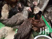 Kienyeji Layers On Sale | Livestock & Poultry for sale in Nairobi, Kayole Central