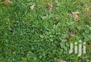 Lawn Grass Weed Control In Kenya | Landscaping & Gardening Services for sale in Nairobi, Roysambu