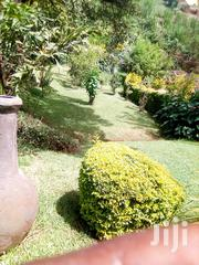 Gardener And Landscaper | Landscaping & Gardening Services for sale in Nairobi, Lavington